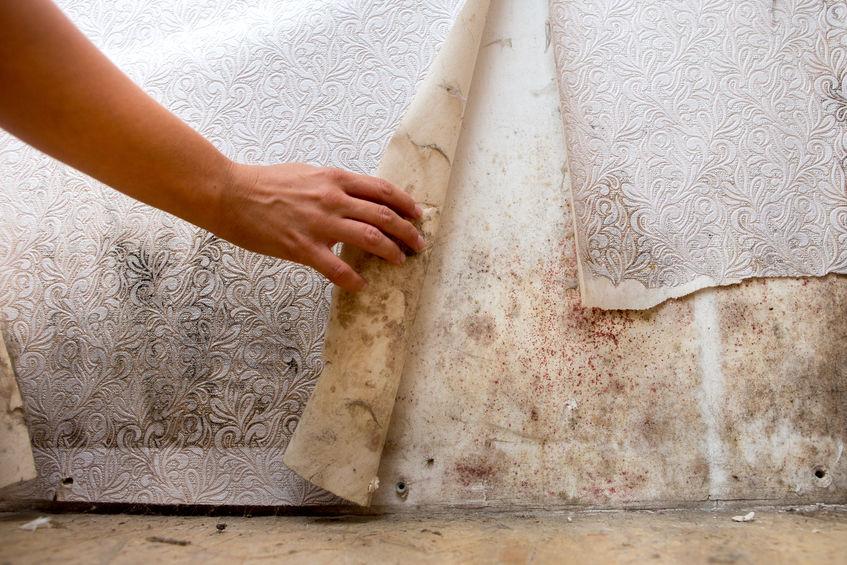 mold damage restoration